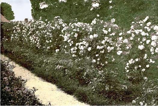 rozarium-historicka-foto.jpg